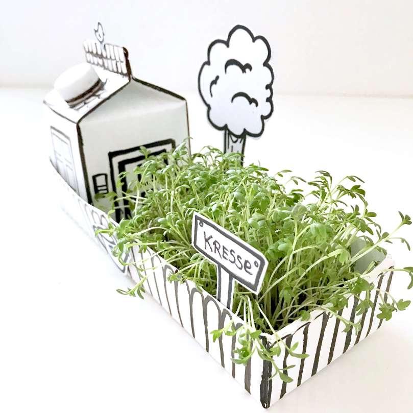 Papphaus mit Garten27
